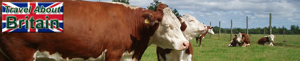 Herefordshire Cattle